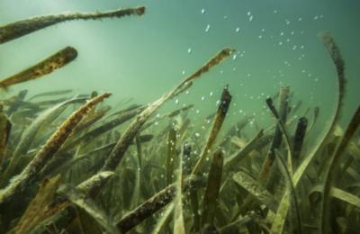 Are Diseases in Ocean Ecosystems Increasing?