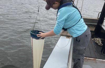 Bay Watch: Tracking Long-term Changes in Nutrients and Phytoplankton Composition in Narragansett Bay, RI