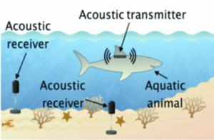 acoustic_telemetry