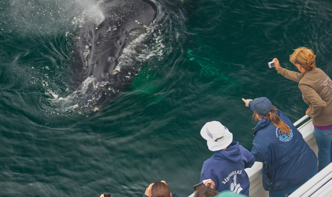 people lean over on whale watch boat to see whale
