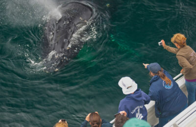 Satisfied? Uncovering visitor perspectives on whale watching