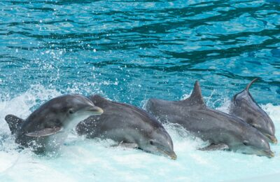 Do drones annoy dolphins?
