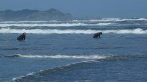 2 figures crouched in ocean surf