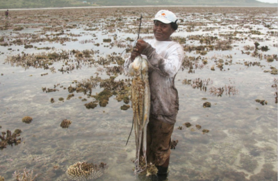 Women gleaners in Mauritius: How COVID-19 and an oil spill amplified gender inequalities in fisheries